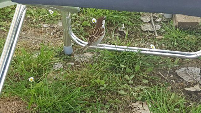 Uccellino al Campeggio
